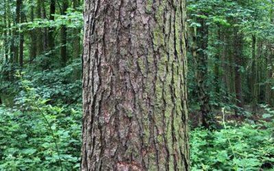 Tree bark image T10