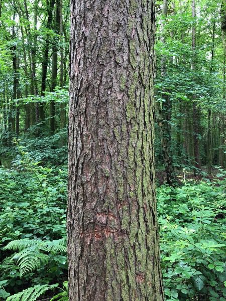 Tree bark image T10 1