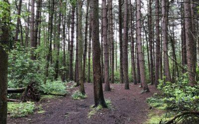 Pine woodland T20