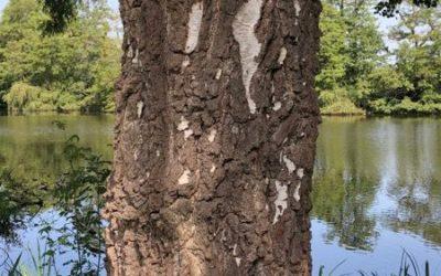 Tree bark image T22