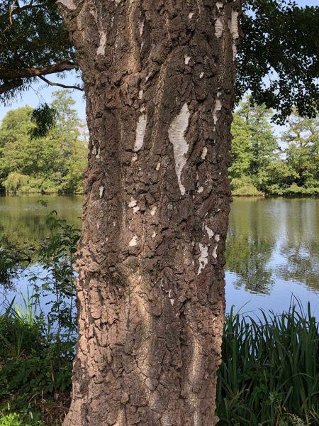 Tree bark image T22 1