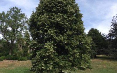 Tree image T23