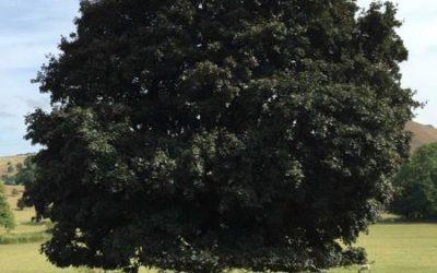 Tree image T24