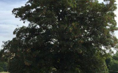 Tree image T25