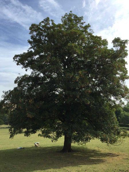Tree image T25 1