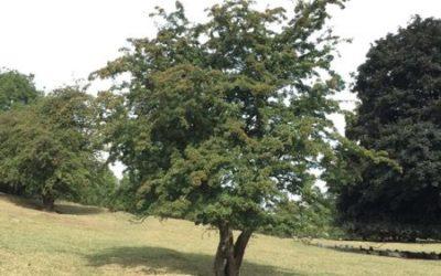 Tree image T26