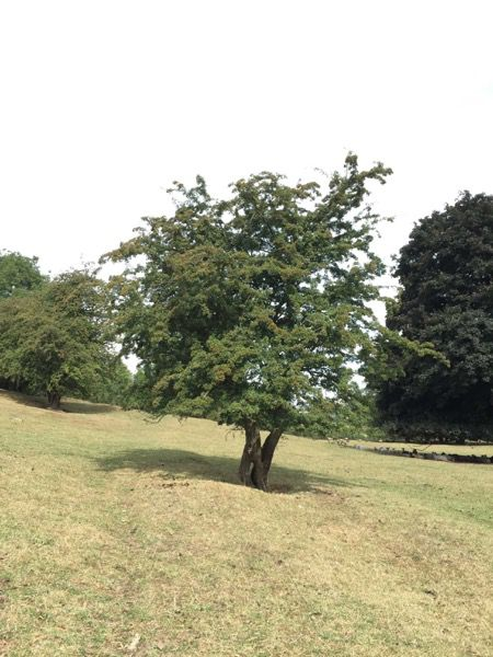 Tree image T26 1