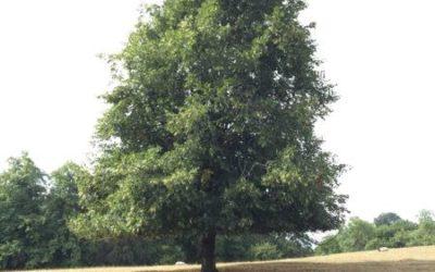Tree image T27