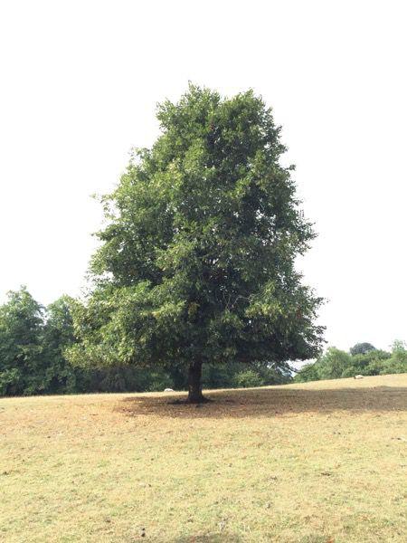 Tree image T27 1