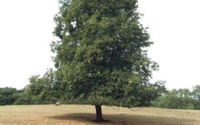 Tree image T28