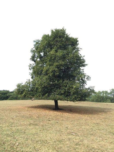 Tree image T28 1