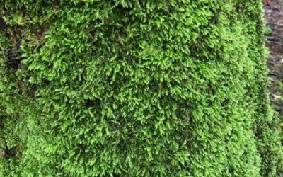 Tree moss texture V04