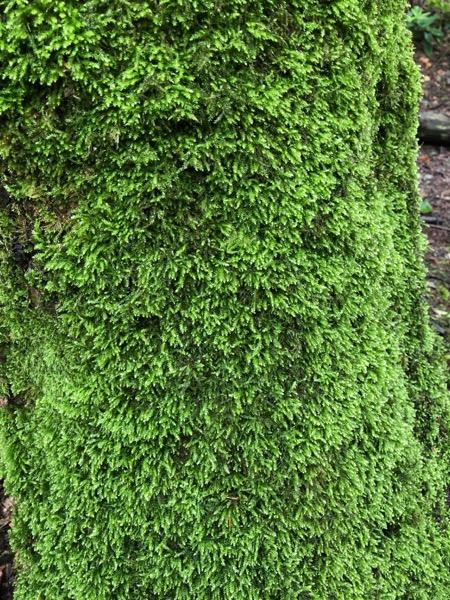 Tree moss texture V04 1