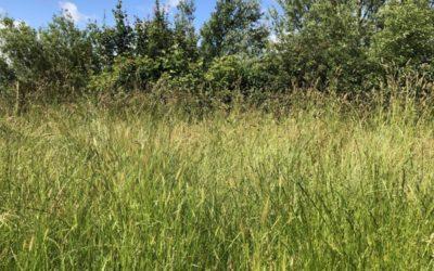 Long Grass Texture V07