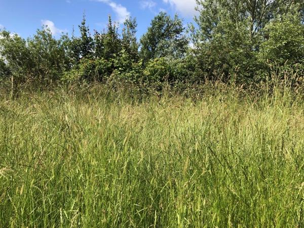 Long Grass Texture V07 1