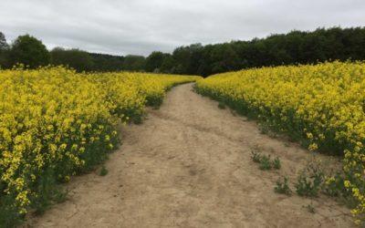 Vegetation texture field