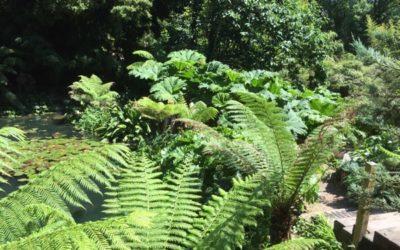 Jungle Texture V11