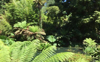 Jungle Texture V12