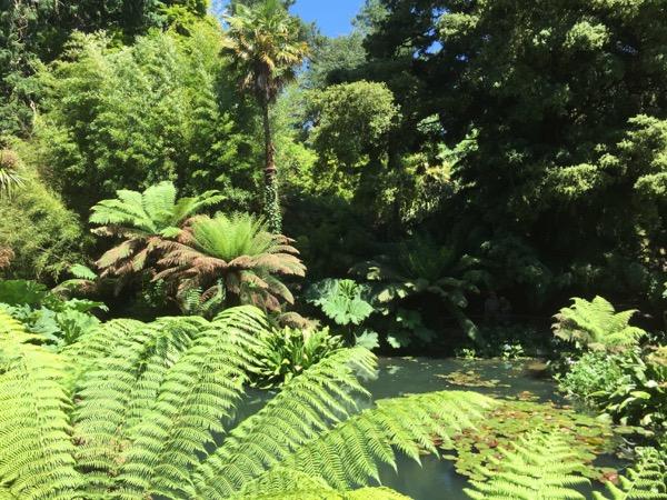 Jungle Texture V12 1