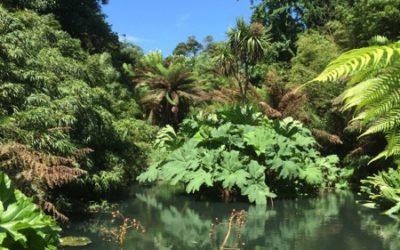 Jungle Texture V13