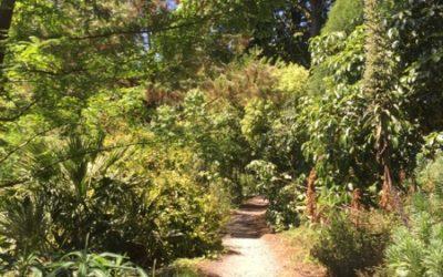 Jungle Texture V15