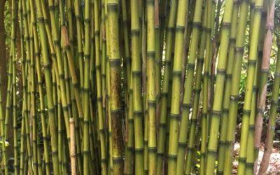 Bamboo Texture V16
