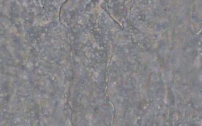 Grey Stone Texture S10