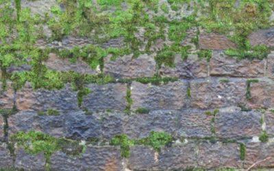 Mossy Stone Texture S01