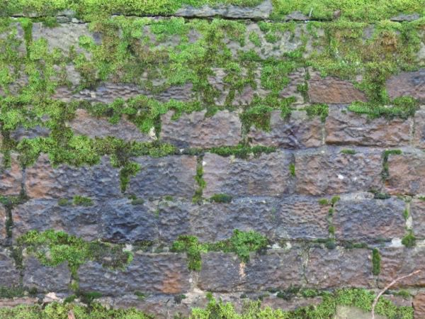 Mossy Stone Texture S01 1