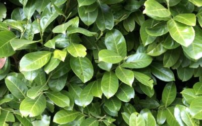 Green Hedge Texture F28