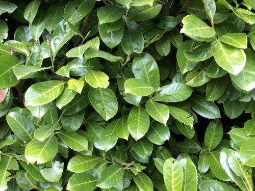 Green Hedge Texture F28 tn