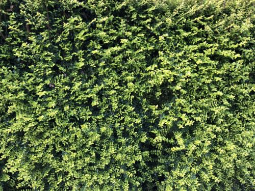 Hedge Texture F22