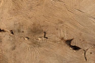 Wood Grain Texture W028