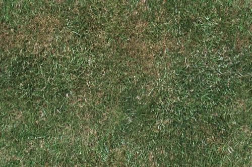 Grass Texture G17