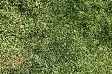 Grass Texture G18