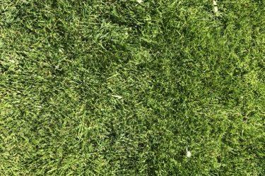 Green Grass Texture G19