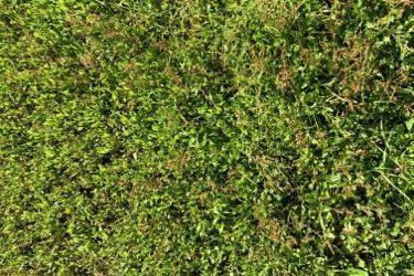 Grass Texture G20