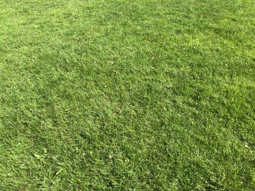 Grass Texture G21