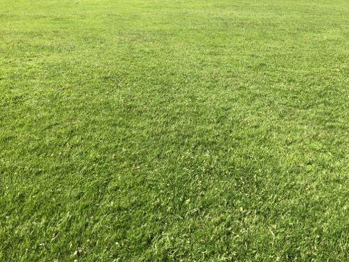 Grass Texture G22