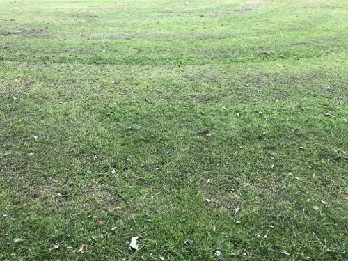 Grass Texture G23