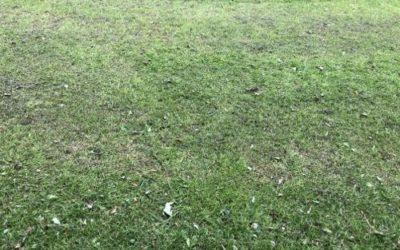 Grass Texture G24