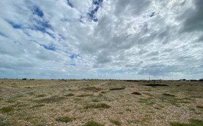 Coast Landscape L23
