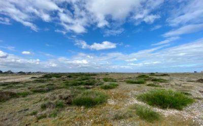 Remote Beach Landscape L26