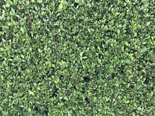 Hedge Texture F34