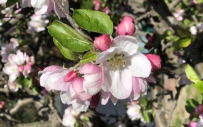 Tree Blossom Texture F42