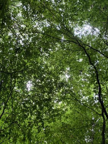 Tree canopy texture F36