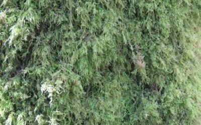 Vegetation Moss Texture V17
