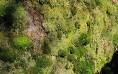Vegetation Moss Texture V18