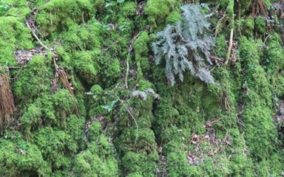 Vegetation Moss Texture V19