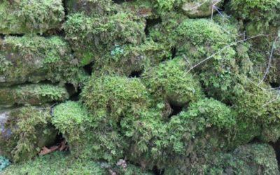 Vegetation Moss Texture V20
